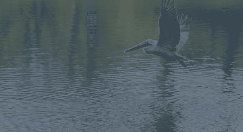 bird over myrtle beach water